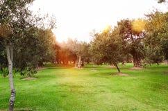 Zonder enige twijfel, is de opmerkelijkste aantrekkelijkheid van San Isidro het Olivar Bos stock afbeelding