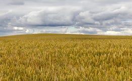 Zone agricole photo stock