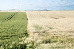 Zone agricole image stock