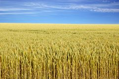 Zone agricole photographie stock