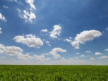 Zone agricole. Photo stock