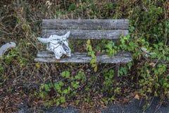 Zone of Alienation. Skull in Chernobyl Exclusion Zone in Ukraine Stock Image
