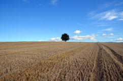 Zone avec l'arbre Photo libre de droits