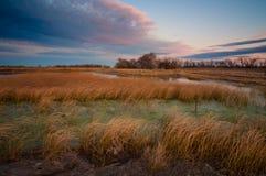 Zone avec l'herbe au coucher du soleil Photo libre de droits
