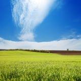 Zone avec l'herbe verte Photo libre de droits