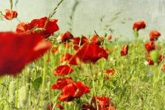 Zone avec la fleur du pavot photo stock