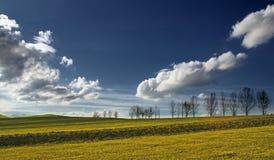 Zone avec les arbres et le ciel bleu Image libre de droits