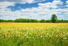 Zone avec les fleurs blanches et jaunes Images stock