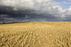 Zone cultivée Image libre de droits