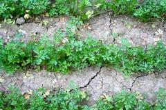 Zone déshydratée Photo libre de droits