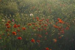 Zone d'été avec des fleurs Image stock