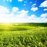 Zone d'été et ciel parfait photo libre de droits