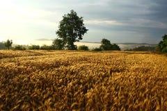 Zone d'agriculture pendant le coucher du soleil Photographie stock libre de droits