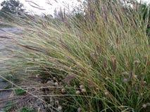Zone d'herbe Image libre de droits