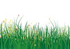 Zone d'herbe