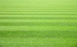 Zone d'herbe Images libres de droits