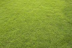 Zone d'herbe Photos libres de droits