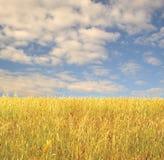 Zone d'herbe photo libre de droits