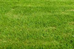 Zone d'herbe Image stock