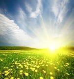 Zone d'herbe avec le pissenlit dans le coucher du soleil Images libres de droits