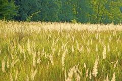 Zone d'herbe dans la campagne photo stock