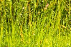 Zone d'herbe dans le soleil d'automne Photos stock