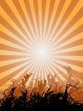 Zone d'herbe de coucher du soleil Photographie stock libre de droits
