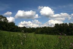 Zone d'herbe fraîche en été Images libres de droits
