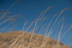Zone d'herbe sèche Photographie stock libre de droits