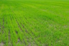 Zone d'herbe verte Photo stock