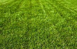 Zone d'herbe verte Images libres de droits