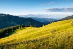 Zone dans les montagnes Forêt d'été en montagnes aménagez l'été normal Pré avec des fleurs en montagnes Horizontal rural images stock