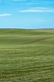 Zone de blé. Photographie stock