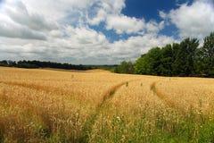Zone de blé Photo libre de droits