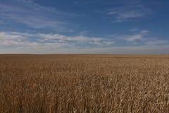 Zone de blé Alberta - au Canada photos stock