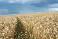 Zone de blé avant tempête Image libre de droits