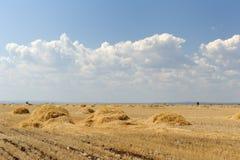 Zone de blé avec des ricks. Horizontal avec le ciel bleu Photographie stock libre de droits