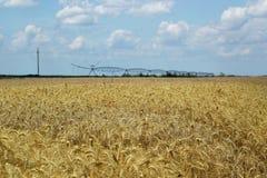 Zone de blé avec le système d'irrigation Photo libre de droits