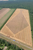 Zone de blé d'or Photo stock