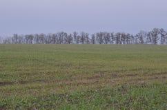 Zone de blé d'hiver Photo libre de droits