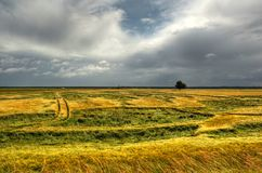 Zone de blé dans le hdr Photos stock