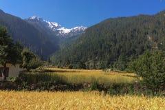 Zone de blé dans les montagnes Photos stock