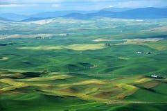 Zone de blé de roulement photographie stock libre de droits