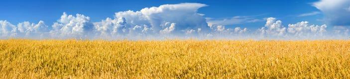 Zone de blé et ciel bleu avec des nuages Photo libre de droits