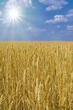 Zone de blé illimitée Images libres de droits
