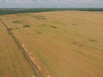 Zone de blé mûr Vue de ci-avant Image libre de droits