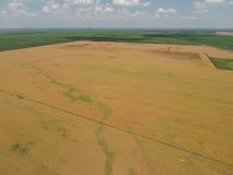 Zone de blé mûr Vue de ci-avant Photo libre de droits