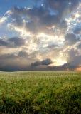 Zone de blé pendant le jour orageux Images libres de droits