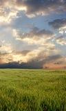 Zone de blé pendant le jour orageux Image stock