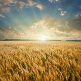 Zone de blé sur le coucher du soleil Photo stock
